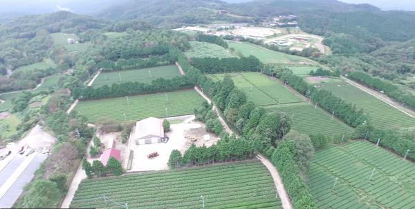 下山の美しき茶園風景!空撮!夏冬!