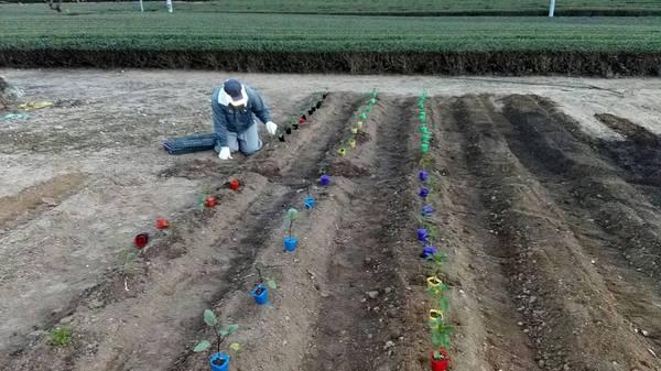新芽の様子&野菜植えました♪