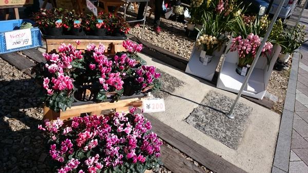 マルシェお花いっぱいフェア開催中☆