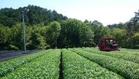 Today's harvest! 本日の収穫風景☆