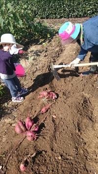 姪っ子と芋掘りしました♪