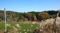 秋の絶景の中、有機JAS検査☆