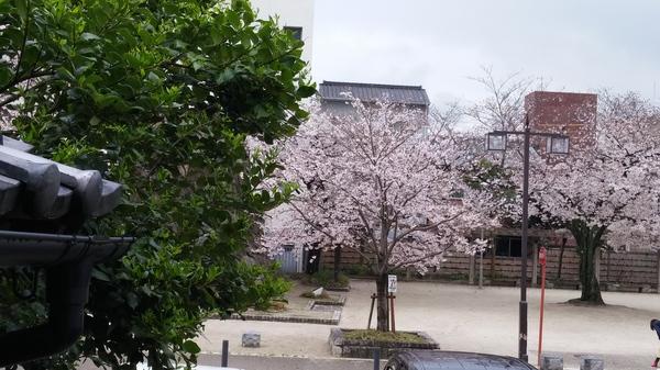 桜映えるころも農園☆
