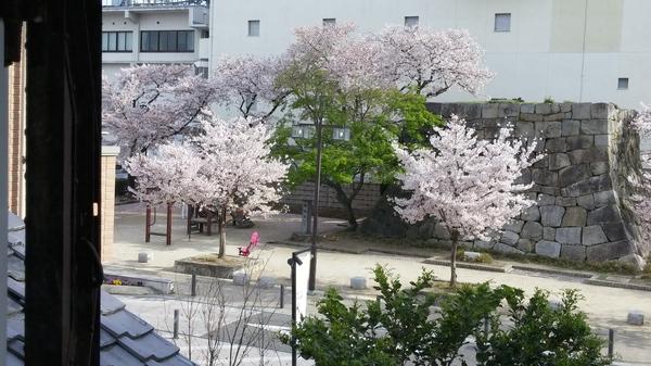 4月4日ころも農園夜桜お花見会☆