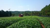 一番茶収穫やっと完了☆
