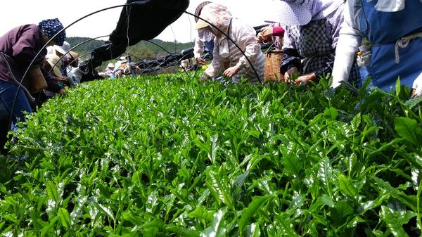 4日被災地支援夢農人マルシェ新茶フェア開催!