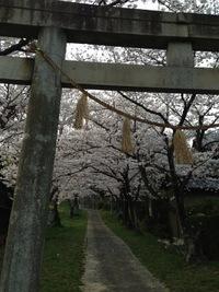 堤本町桜情報