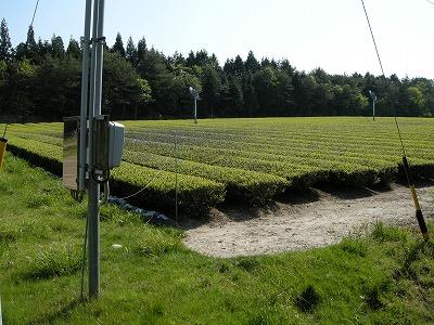 お茶畑の扇風機