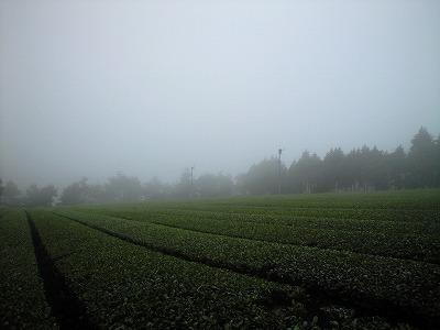 すんげ~霧