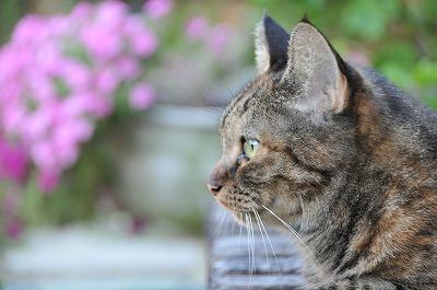 我が家の愛猫まろんさん♪