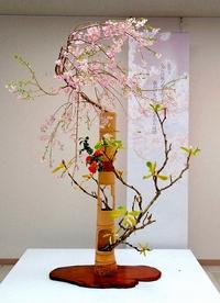 前華道連盟理事長の鈴木真幸登さんが「桜」で個展