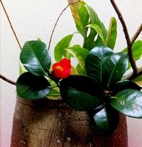 今夜の賄い花は椿一輪