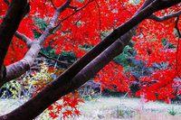 大沢池の紅葉が見ごろ