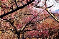 平芝公園と西山公園で春のことぶれを見つけた