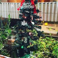 クリスマスに着替えました❤️ 2018/12/07 11:12:54