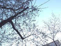 桜城址公園中継♪ 2015/03/26 16:56:16