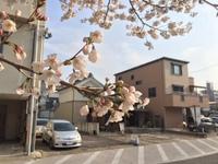 酔いどれ 夜桜 お花見会♪ 2018/03/27 13:47:46