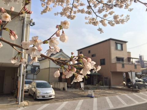 酔いどれ 夜桜 お花見会♪