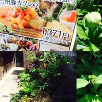 新緑の庭!大好き!