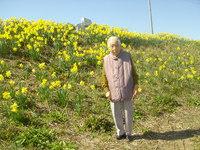 幸田町では有名な水仙を見に! 2016/03/22 17:58:44