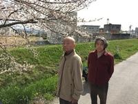 歩いて5分 満開の桜 2016/04/02 15:08:10