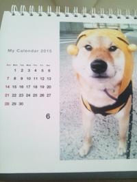 柴犬孝太の6月カレンダー