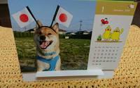 2016年柴犬孝太のカレンダー 2016/12/31 11:51:36