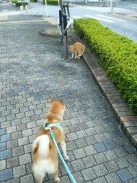 猫ちゃんとエルちゃん