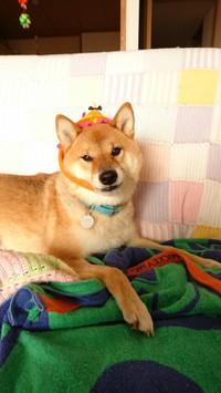 ハロウィンの帽子は被ったほうがいい?