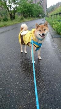 久しぶりの大雨