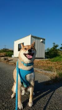 今日もいい天気♪【ばぁーちゃんのナス】