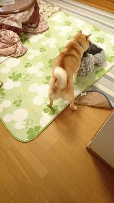 差し入れ&柴犬孝太のデザートタイム