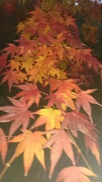 紅葉を見に行ってきた!