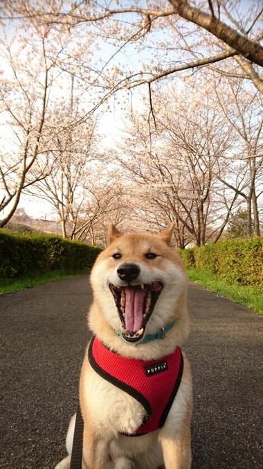 毎年恒例^^桜並木での撮影会♪