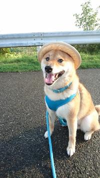 良い子はお帽子被ってね【熱中症対策に帽子は効果あり?】