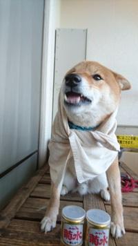 可愛すぎて笑える犬歩き【動画】