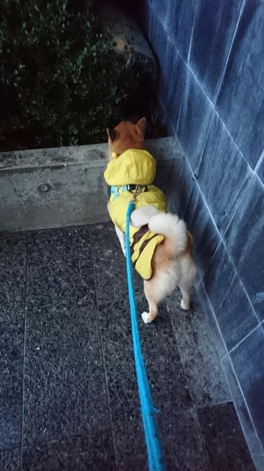 雨に濡れると二重に・・・