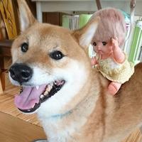 メルちゃん・ぽぽちゃん人形は男の子にもおススメ 2017/08/19 16:31:21