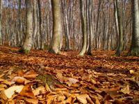 風の音に木漏れ日がゆれる美人林