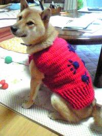 柴犬の服が完成!
