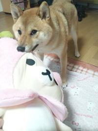 遊ぶ子供を見守る犬