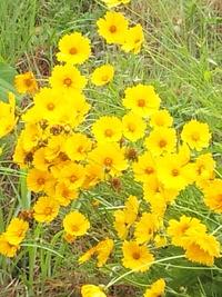 散歩道の花 2