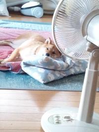 扇風機と座布団