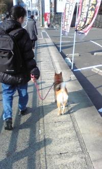 ばぁーちゃんと散歩