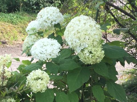 家の周りの花