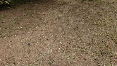 おじちゃん草刈りをする(#^^#)【ウチの庭】