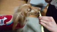Lちゃん歯磨きをする~の巻き