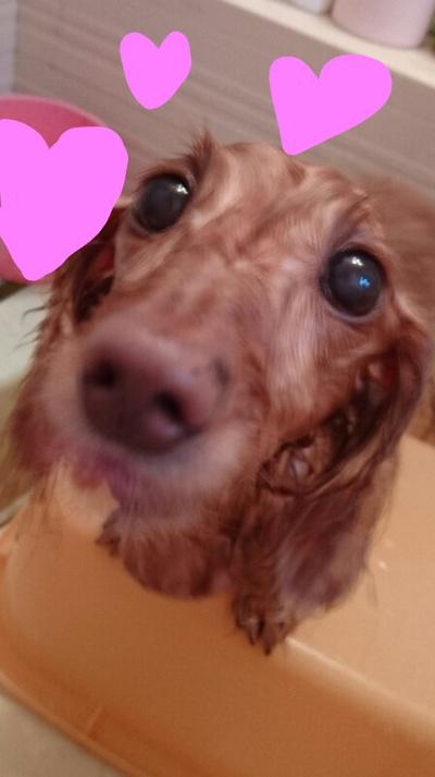 ワンコでもお風呂大好き(#^.^#)【親ばか】