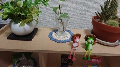 すごく可愛い~♡100均商品とは思えない(#^.^#)【ダイソー】