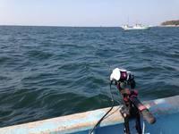 11月7日(金) 師崎沖のウタセ真鯛